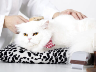 cats also getting special grooming tips from owner